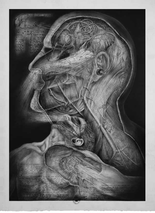 Olfactory Man - Alambfleuric Brains  Drawing made by Peter De Cupere, 2010